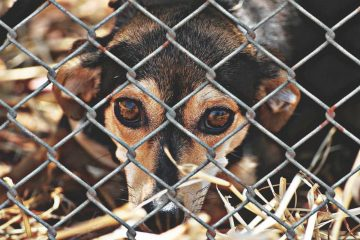 New law may give tax credit to those who adopt pets