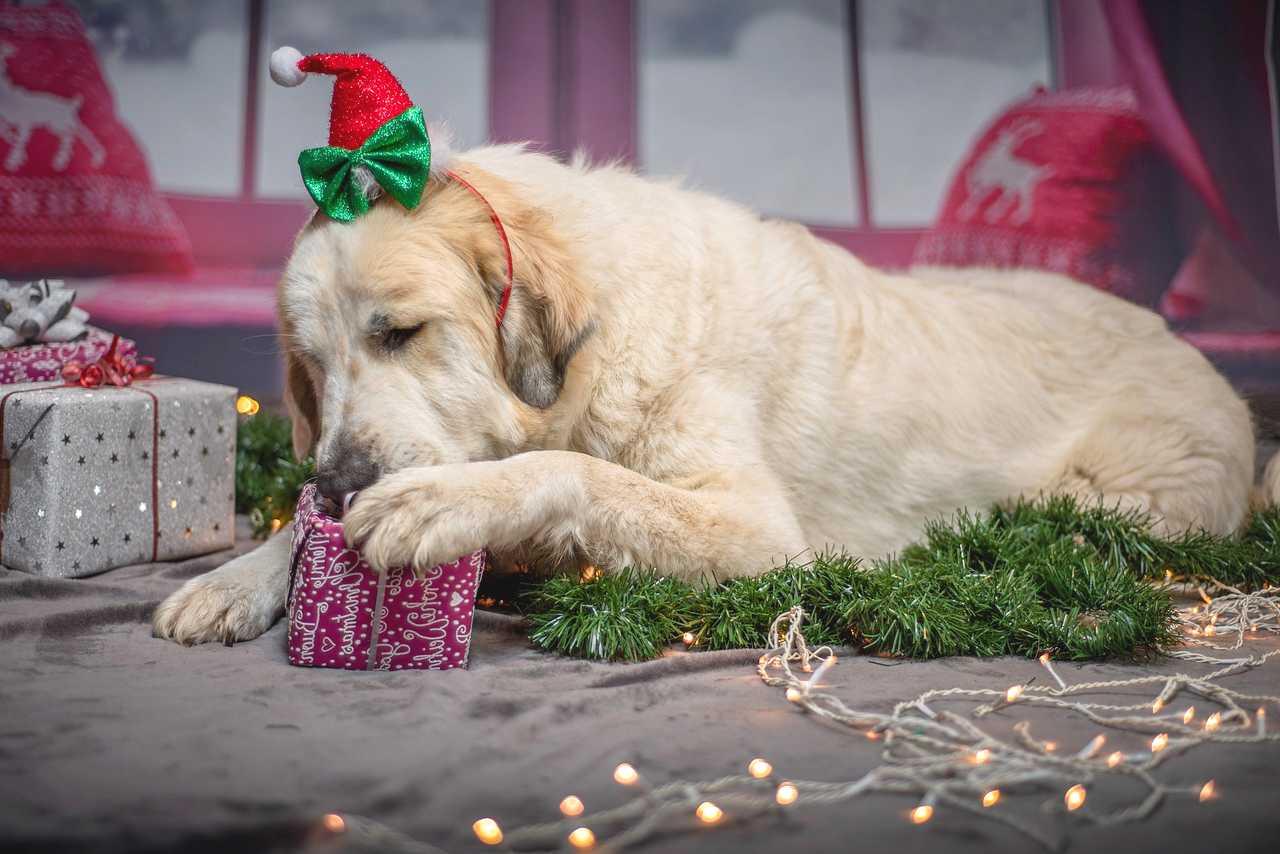 Dog Unwrap a gift