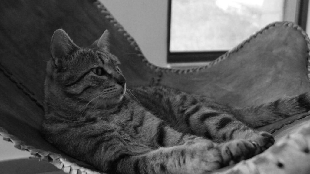 Cat Passes Away
