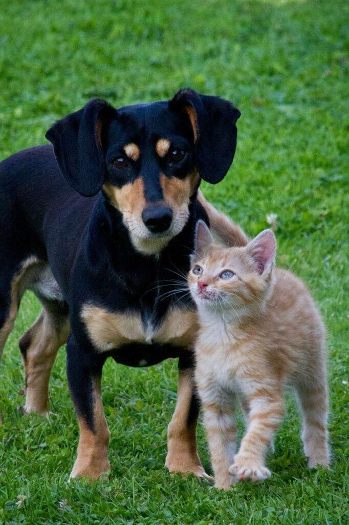 Dog And Cat Goofing Around