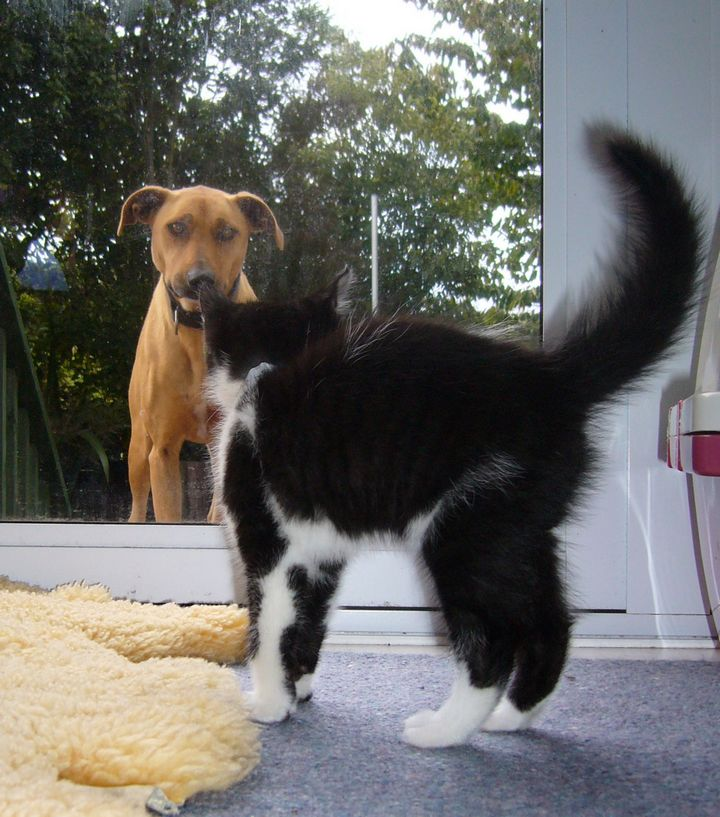 Dog And Cat Meeting for the First Time