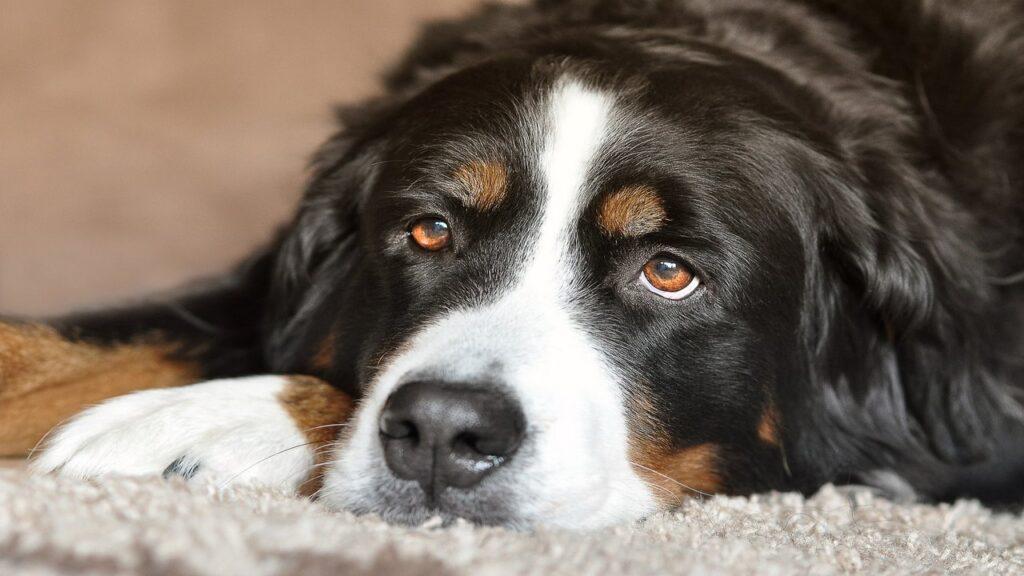 Dog Sitting Quietly