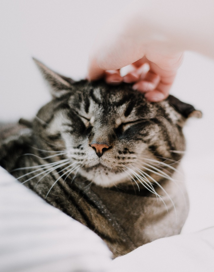 How Should You Give Cat Good Cuddles