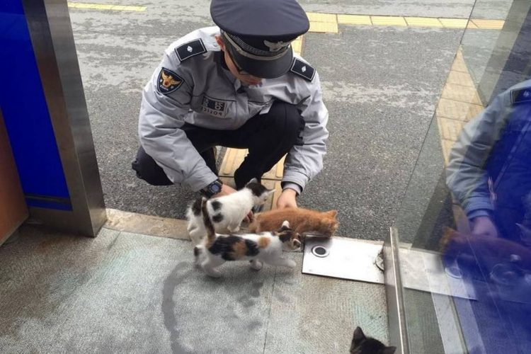 Pregnant stray cat gives birth to beautiful kittens in a police station