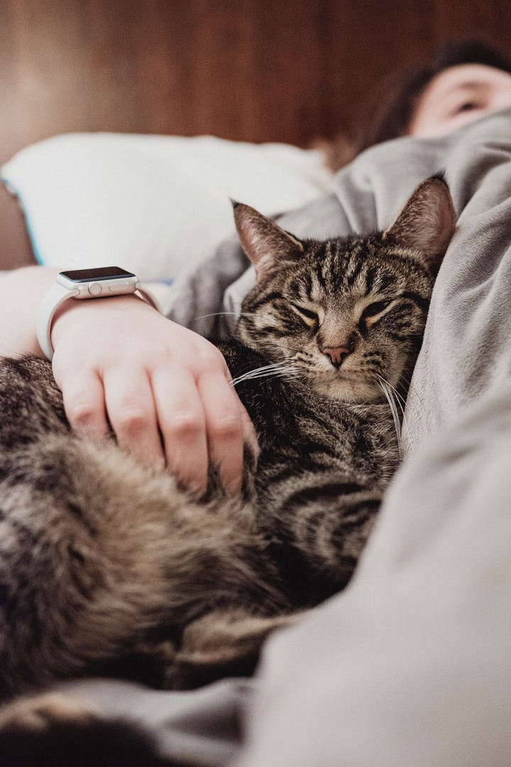 Why Do Some Home Cats Cuddle More Than Others