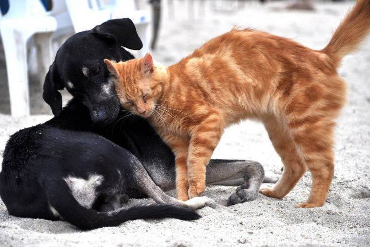 dog loses kitty best friend then fosters hundreds of cats in her memory