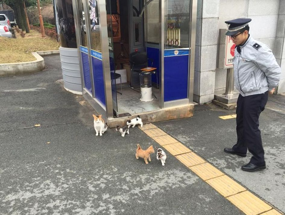 stray cat gives birth to beautiful kittens in a police station