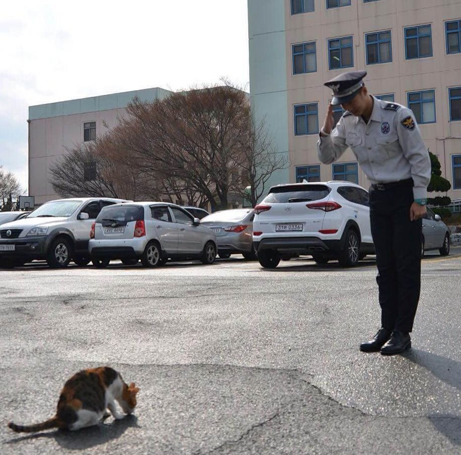 stray cat in a police station