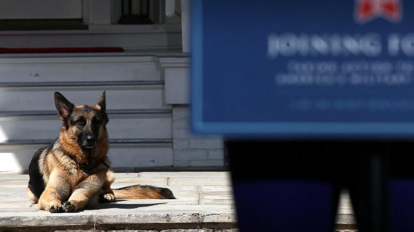 Champ lying behind his master during a speech when Joe Biden was vice president of Obama