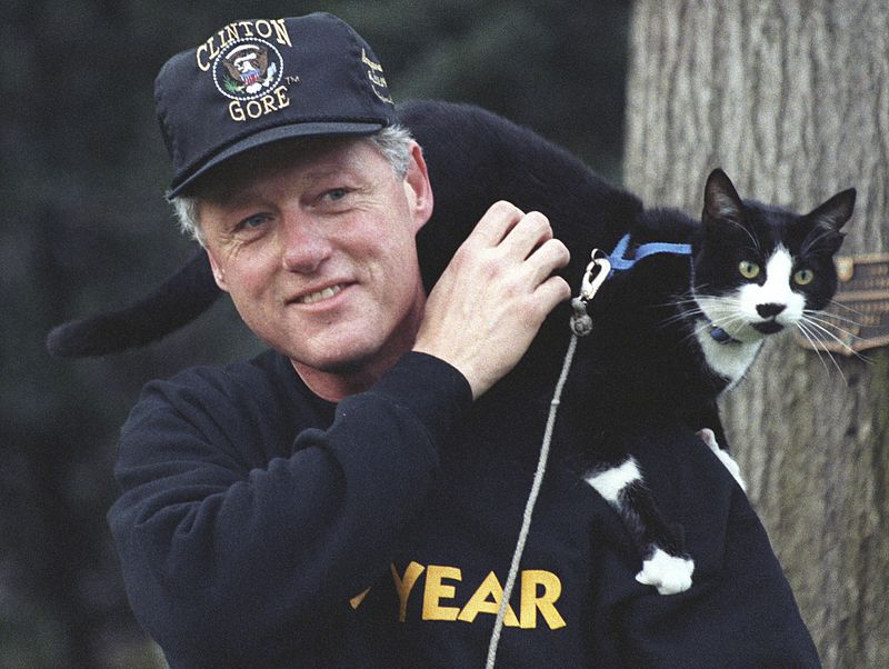 Socks perches on President Clinton's shoulder in 1993