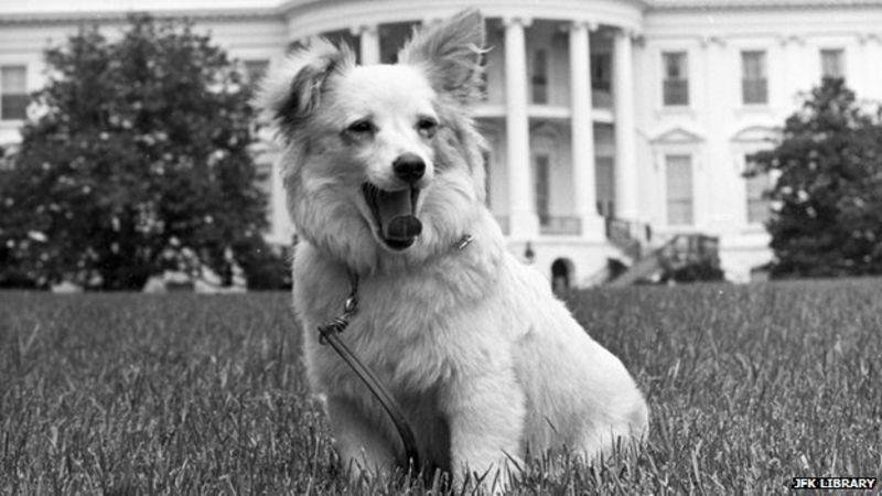 pushinka whitehouse