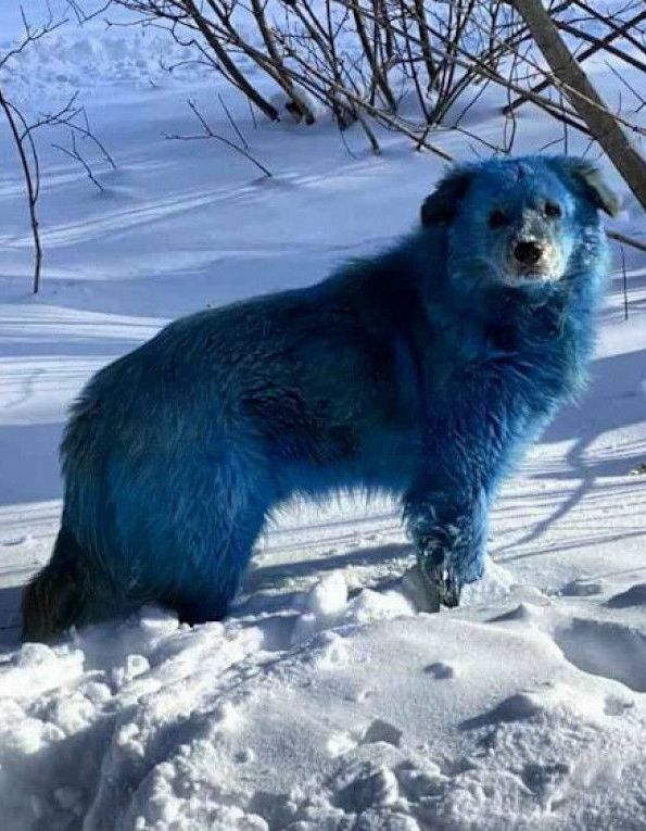 Blue Russian Dogs Spotted Near Abandoned Factory
