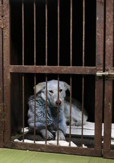Blue Dogs Found Roaming Near Abandoned Chemical Plant