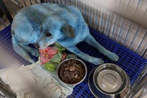 BLUE stray dogs spotted near abandoned Russian chemical factory