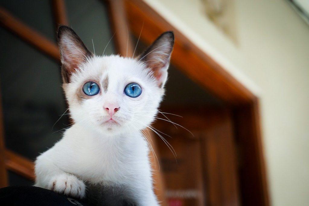 Kitten education 10 mistakes to avoid