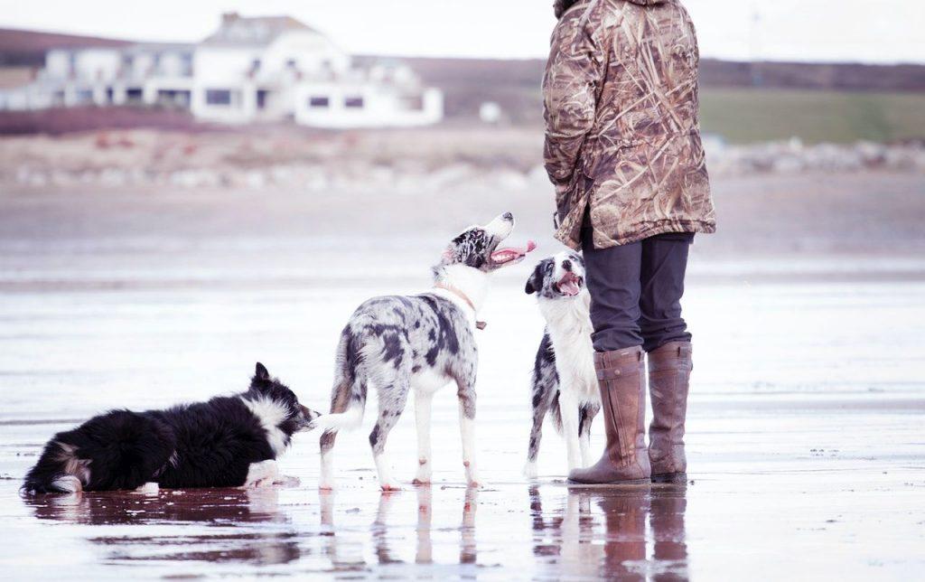 dog ownership heart benefits