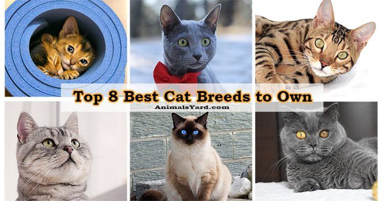 Top 8 Best Cat Breeds to Own
