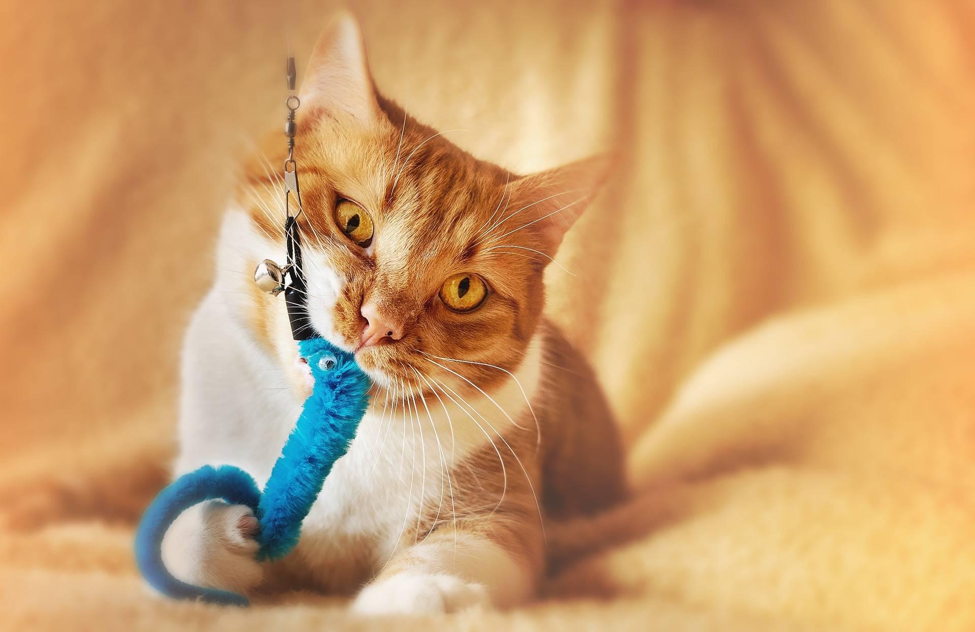 Cat Training Fundamentals