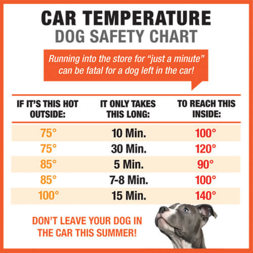 The Dangers of Leaving Dogs in Cars